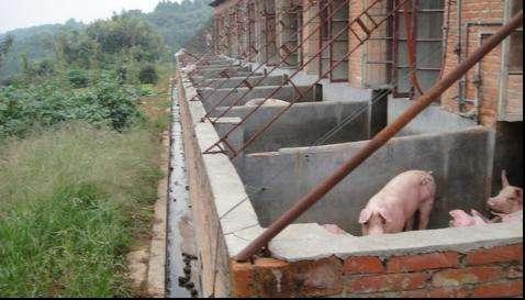 养猪场废水的处理方法和工艺.jpg